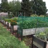Minimize Costs While Maximizing Your Garden