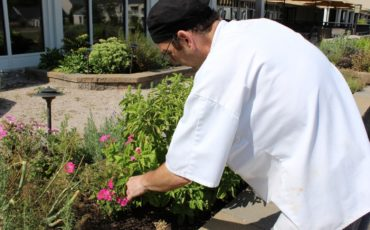 Chef picking fresh herbs from this Therapeutic Garden for residents meals
