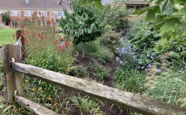 Meadowood-Rain Garden
