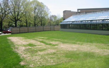 The Therapeutic Garden before construction